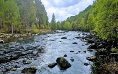 River Dee Trust Tackling Declining Salmon Numbers